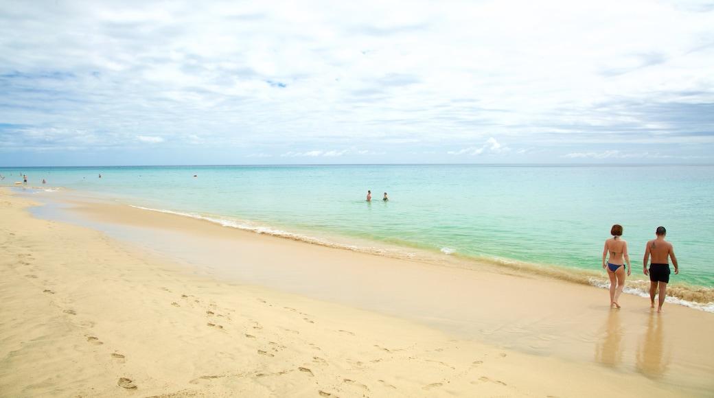 Playa de Jandia mostrando vista della costa, nuoto e spiaggia sabbiosa
