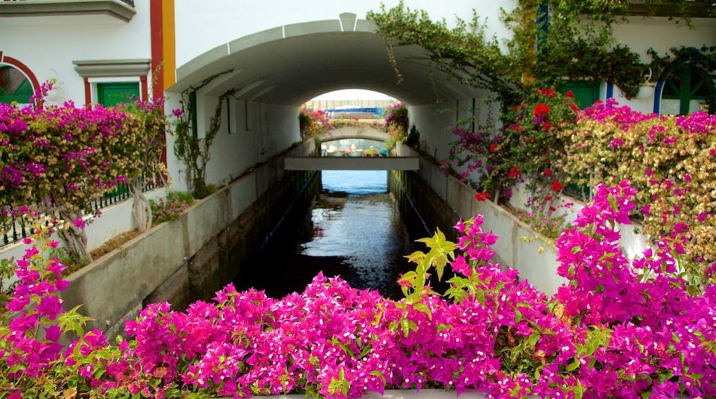 Mogán que incluye flores y un río o arroyo