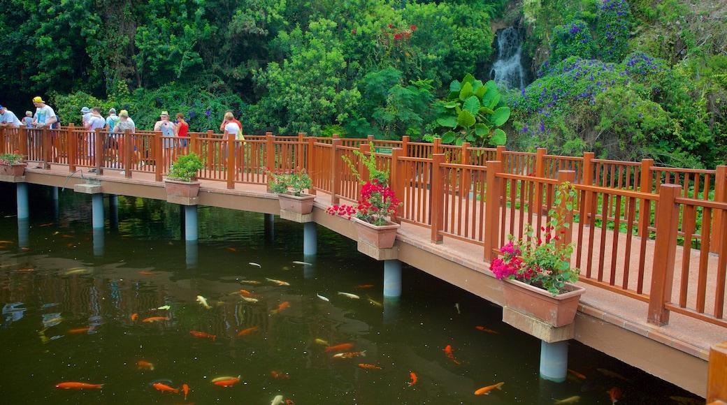 Loro Parque welches beinhaltet Regenwald, Meeresbewohner und Park