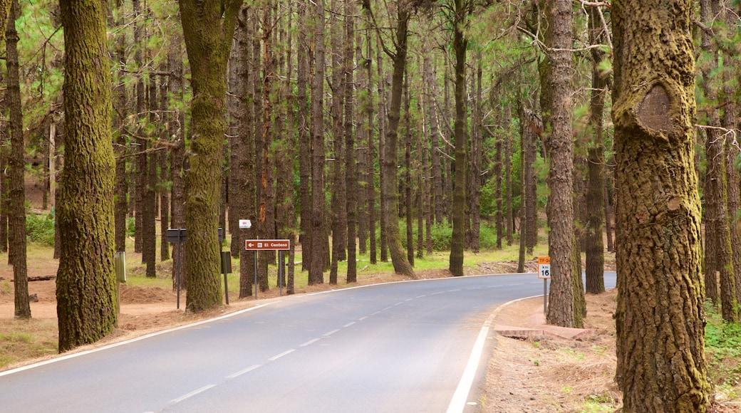 Santiago del Teide som viser skove