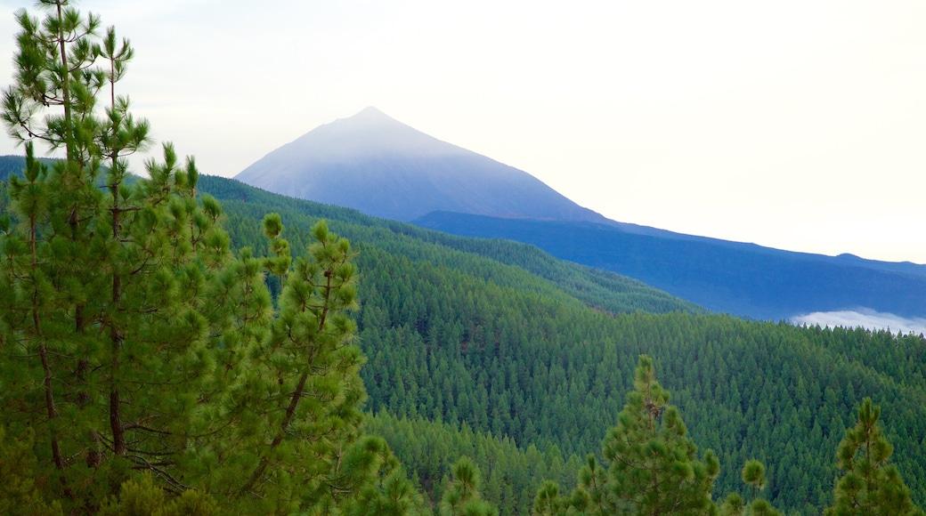 Santiago del Teide og byder på bjerge og skove