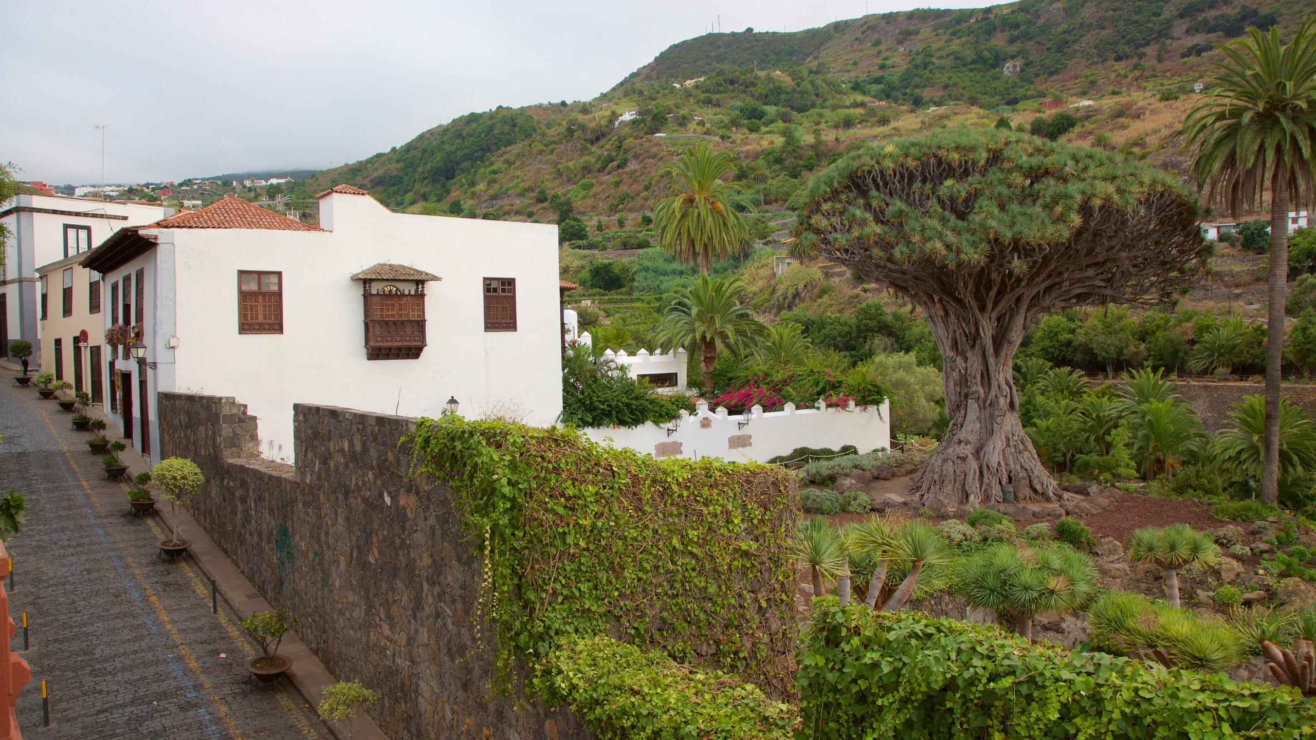 Icod de los Vinos, Canary Islands, Spain