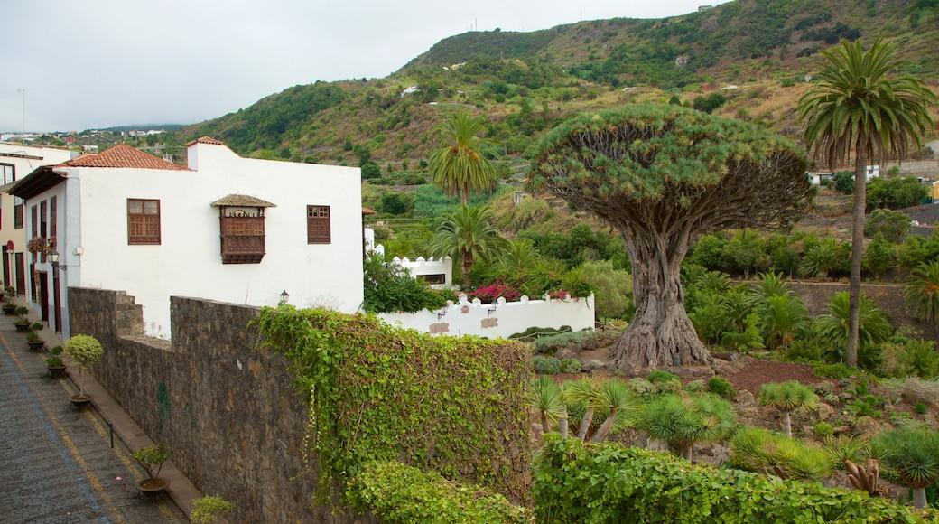 Det Gamle Drageblodstræ som omfatter en lille by eller en landsby