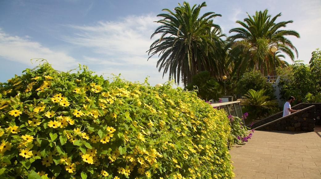 Sauzal mostrando flores y un jardín