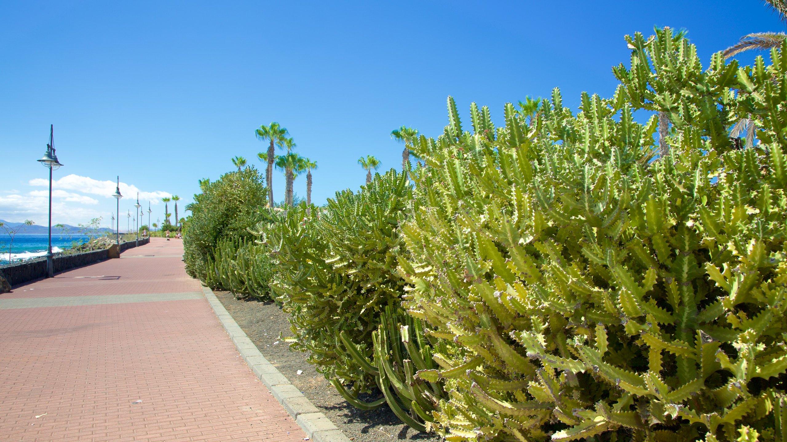 Playa Blanca, Yaiza, Las Palmas, Canary Islands, Spain