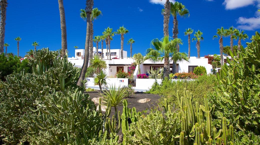 Playa Blanca das einen Haus und Garten