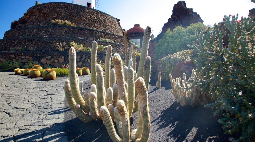 Jardin des cactus qui includes jardin