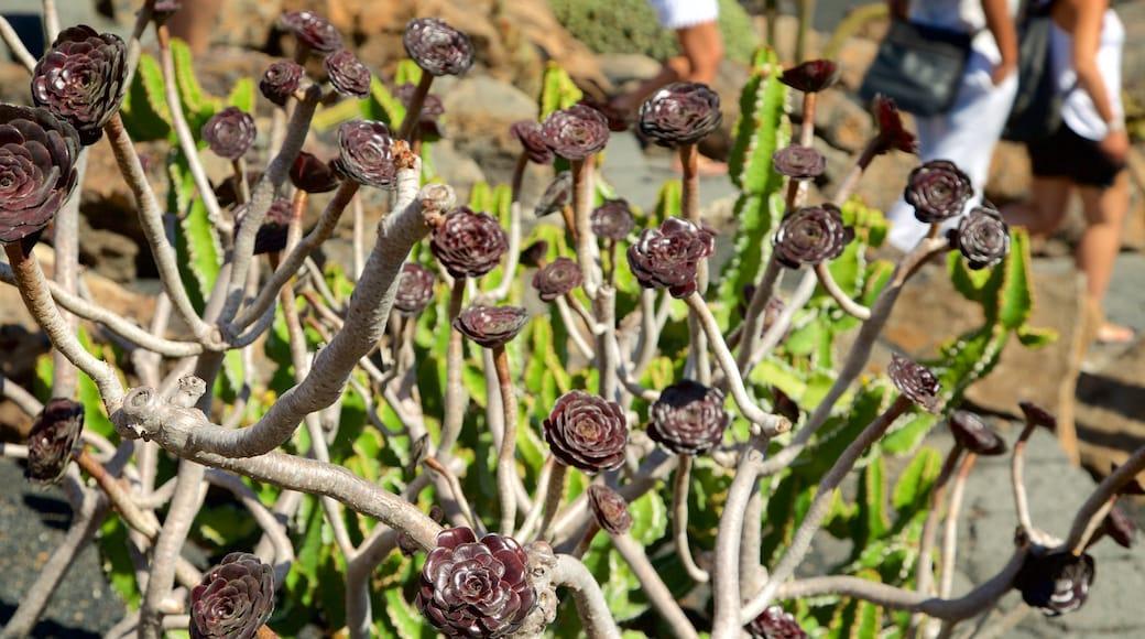 Jardin des cactus montrant fleurs et parc