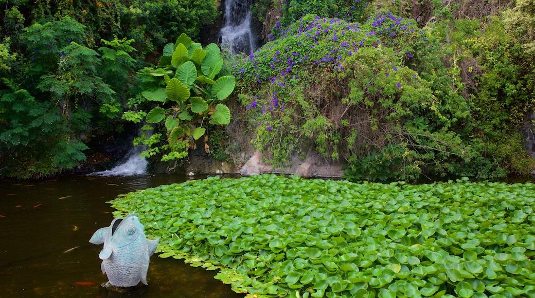 Loro Parque welches beinhaltet Wasserfall, Garten und Teich