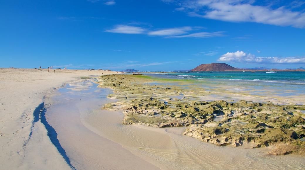 Playa de Corralejo ofreciendo una playa y vistas de una costa