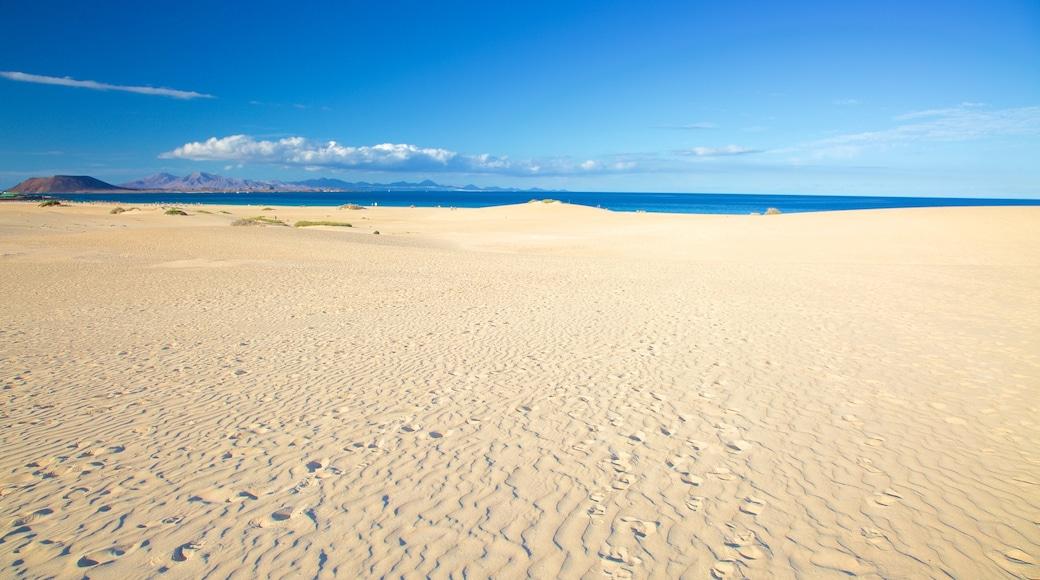 Parque Natural de las Dunas de Corralejo mostrando una playa de arena