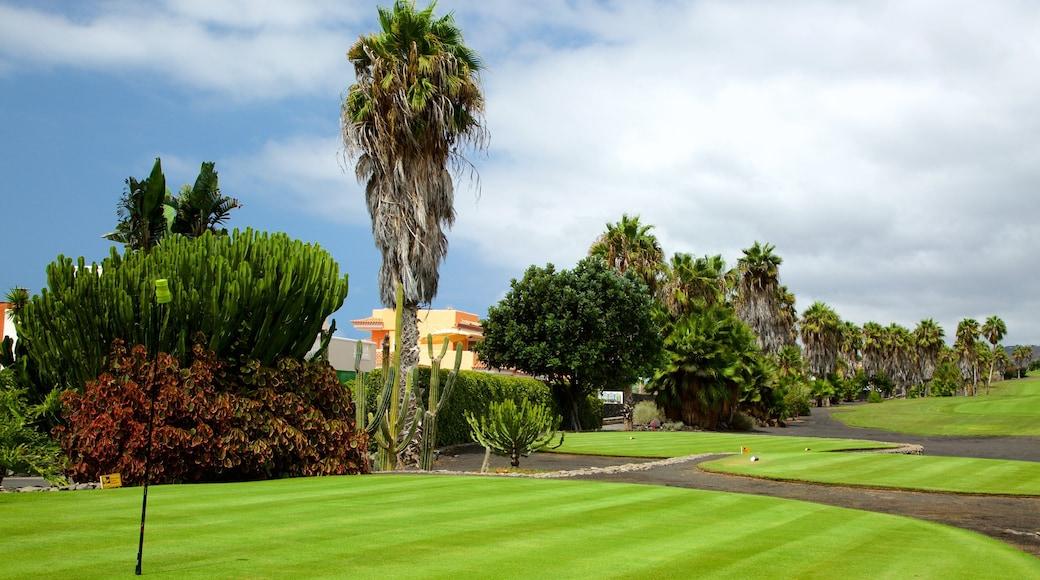 Golf Costa Adeje og byder på golf og tropiske områder