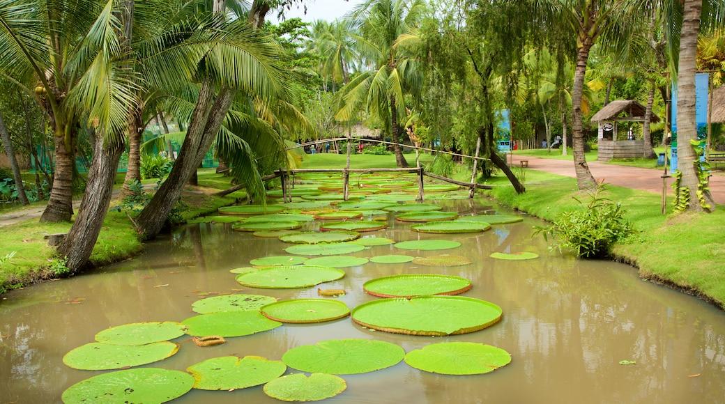 호치민시 이 포함 연못 과 정원