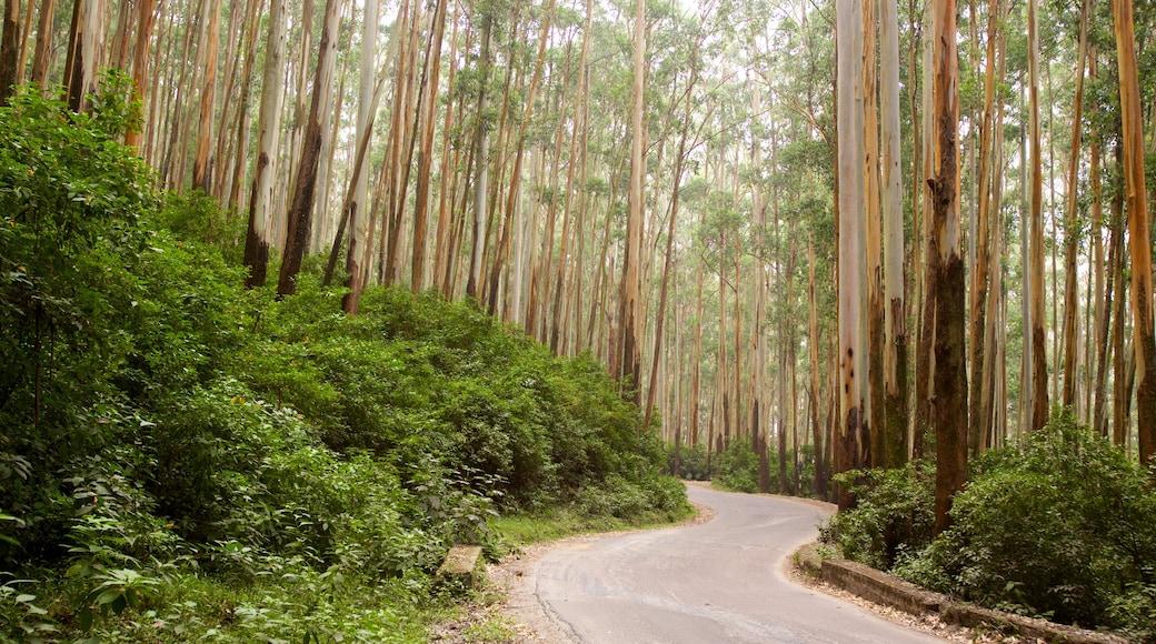 Ooty montrant scènes forestières