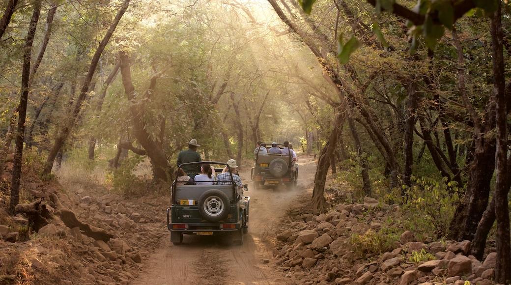Ranthambore National Park showing 4-wheel driving