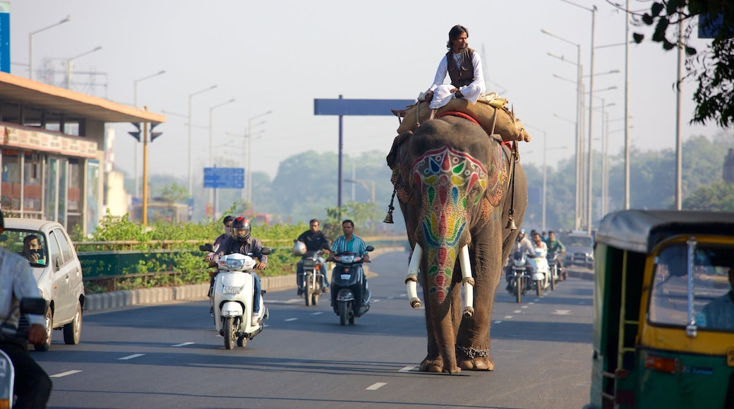 Ahmedabad showing motorcycle riding and land animals