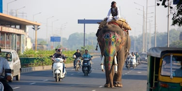 Ahmedabad which includes motorbike riding and land animals