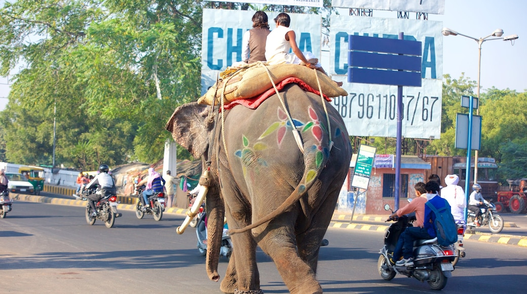 Ahmedabad which includes land animals and motorcycle riding