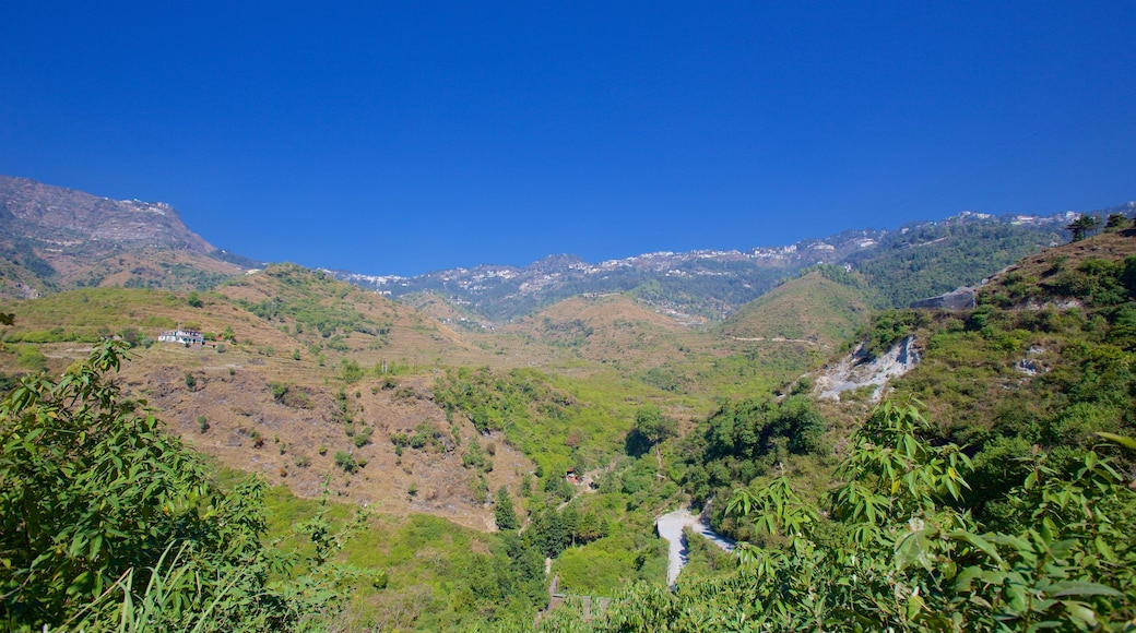 Mussoorie showing rainforest and tranquil scenes