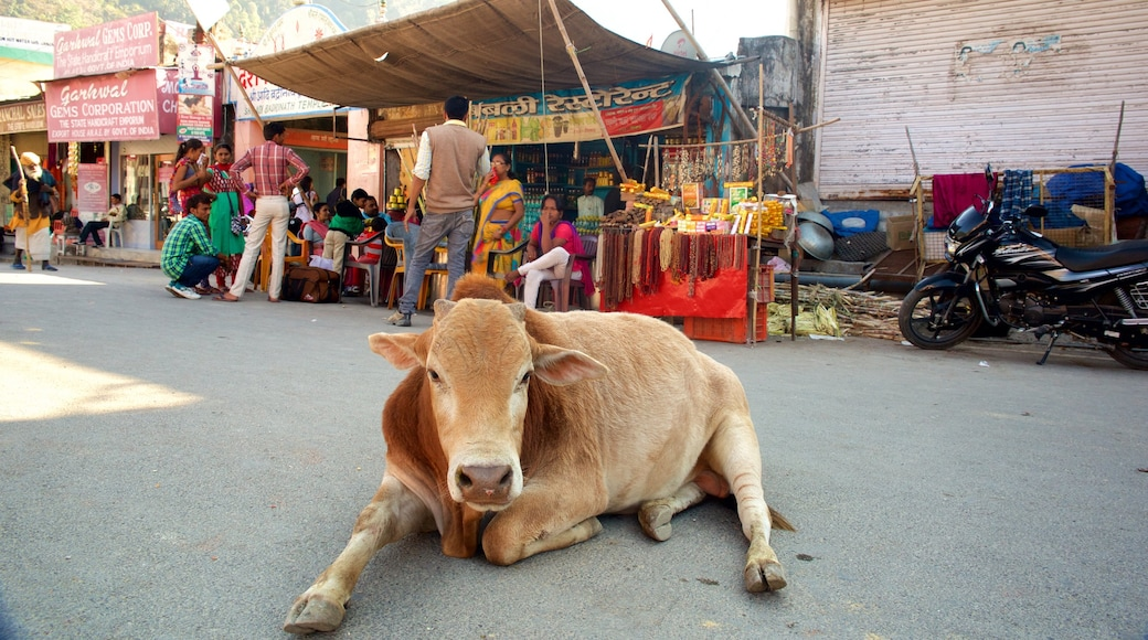 Haridwar showing land animals and markets