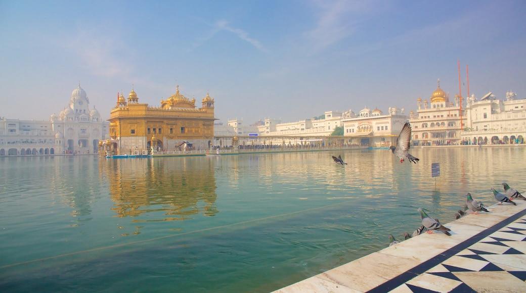 Temple d\'or montrant lac ou étang, vie des oiseaux et patrimoine historique