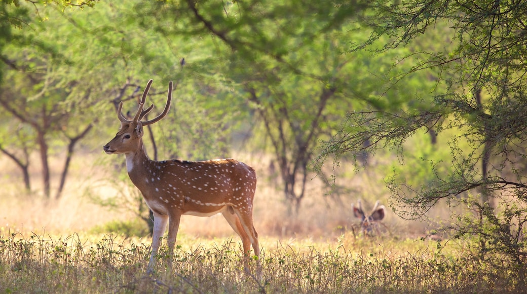 Ranthambore National Park featuring tranquil scenes and animals