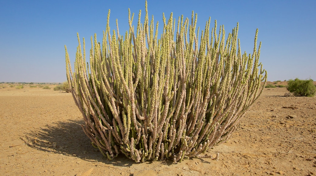 Desert National Park which includes tranquil scenes and desert views