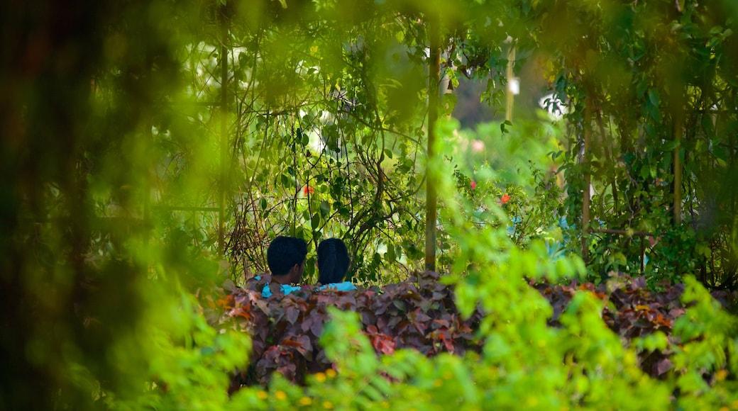 巴比倫空中花園 设有 公園