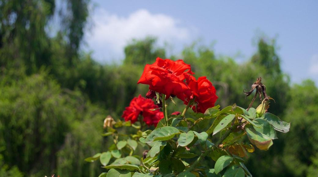 Zakir Rose Garden showing flowers and a park