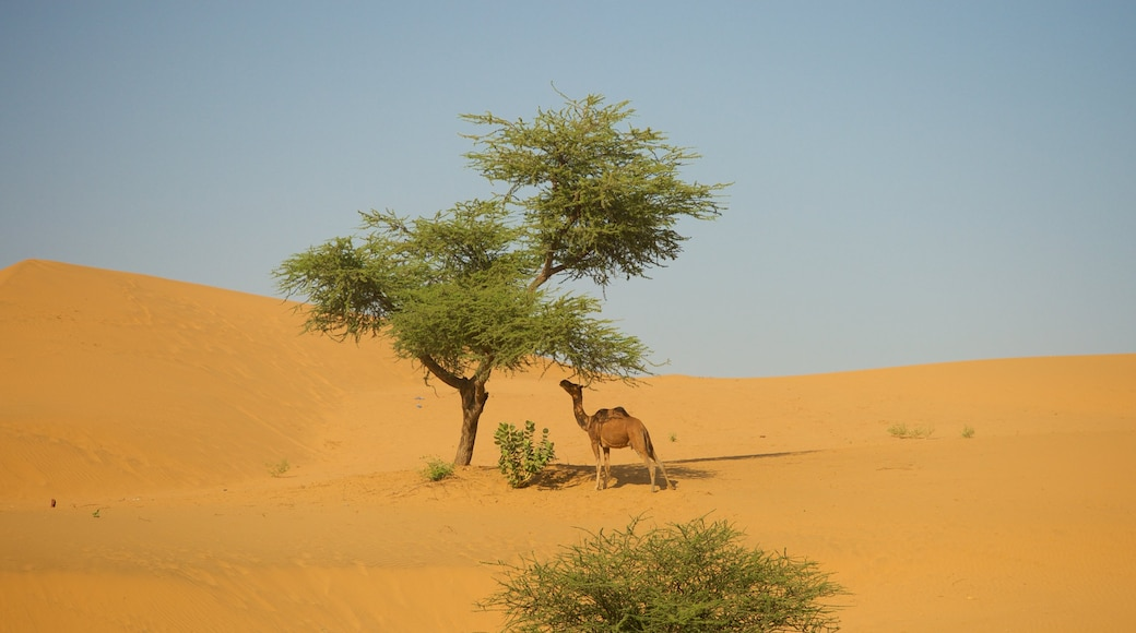 India which includes land animals and desert views