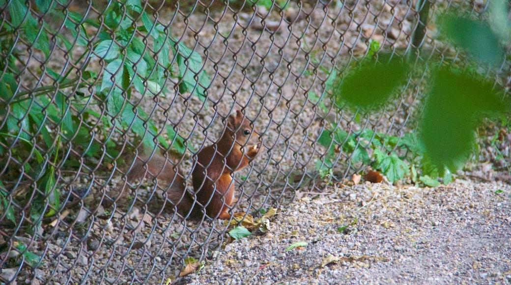 Tiergarten Schönbrunn das einen niedliche oder freundliche Tiere und Zootiere