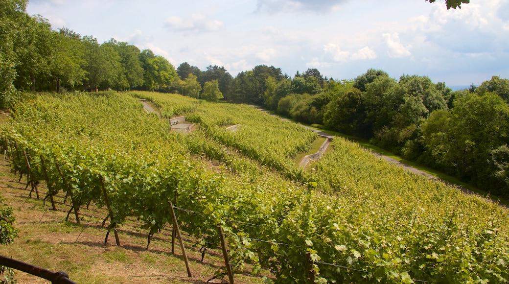 Lohberg mit einem Farmland und ruhige Szenerie