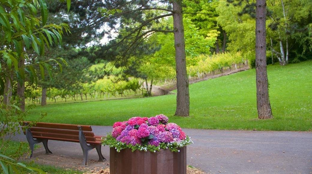 Lohberg welches beinhaltet Park und Blumen