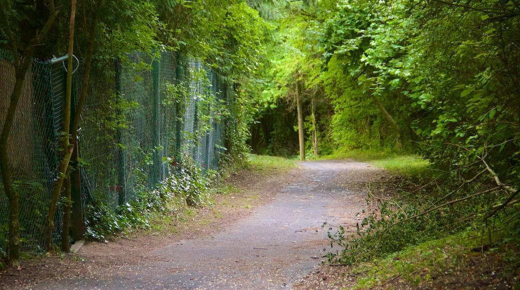Lohberg das einen Park