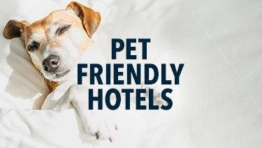 Pet Friendly Hotel Deals