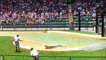 Australia Zoo Day Trip from the Gold Coast