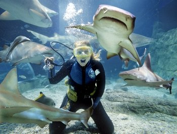 Melbourne Shark Dive Experience