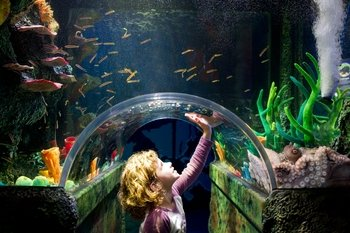 Skip The Line: SEA LIFE Melbourne Aquarium Admission