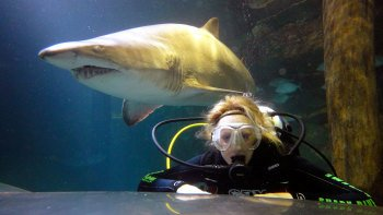 Shark Dive Xtreme at Manly SEA LIFE Sanctuary