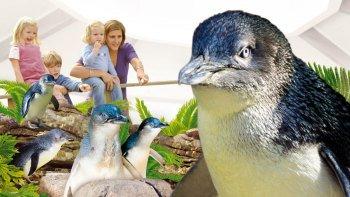 Tickets, museos, atracciones,Entradas a atracciones principales,Acuario Sea Life