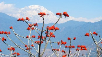 Small-Group Pokhara Hike Tour