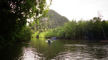 Mangrove Forest & Eagle Watching Tour