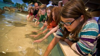 New England Aquarium with Optional Ticket for IMAX® Theater