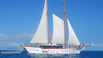Whale's Tale Sail and Snorkel Day Cruise