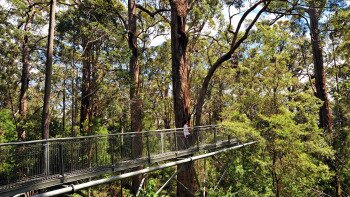 Valley of the Giants & Tree-Top Walk Day Tour from Perth
