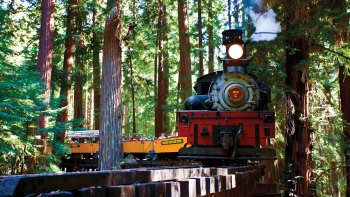 Redwood Forest Steam Train Adventure