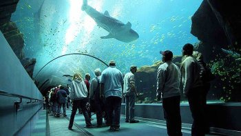 Attractions Activities Things To Do In Atlanta Expedia
