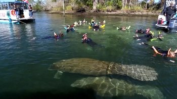 Florida Manatee Adventure & Airboat Ride