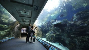Admission to the Aquarium of the Pacific