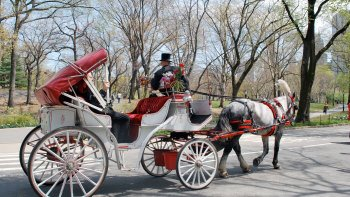 Central Park Horse & Carriage Ride